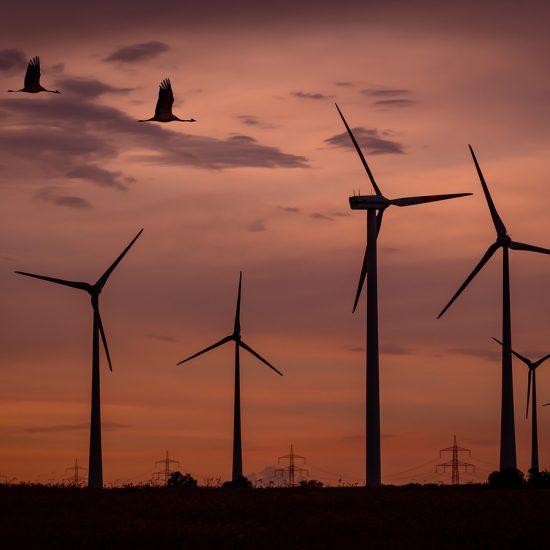 wind park, sunset, birds